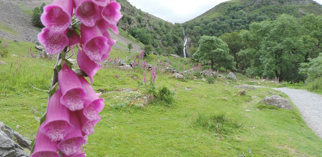 View of a trail at Coedydd Aber National Nature Reserve with various flowers along the trail
