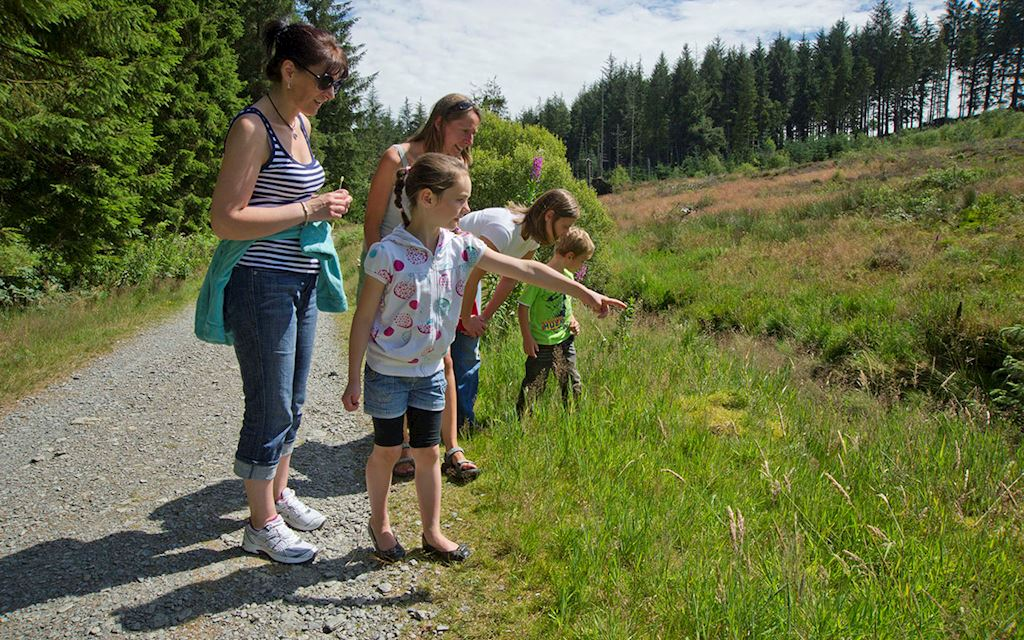 Group walking in Hafren Forest
