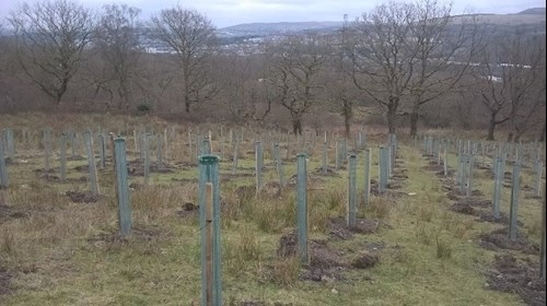 View of trees growing in Gethin woodland