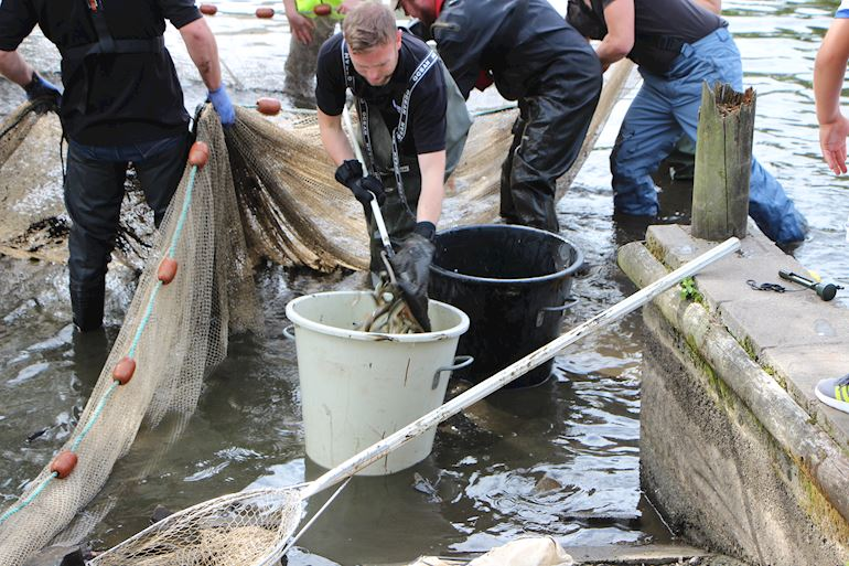 NRW with Newport City Council and local angling clubs to save fish at Fourteen Locks