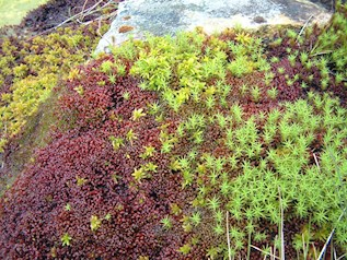 Image of vegetation at Cadair Idris