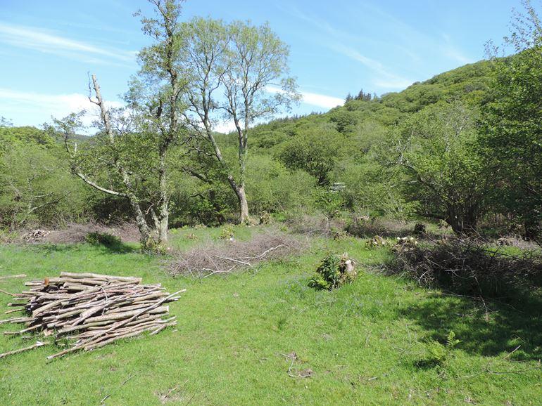 Coedydd Aber Alder Woodland