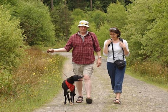 Couple walking with a dog in a forest