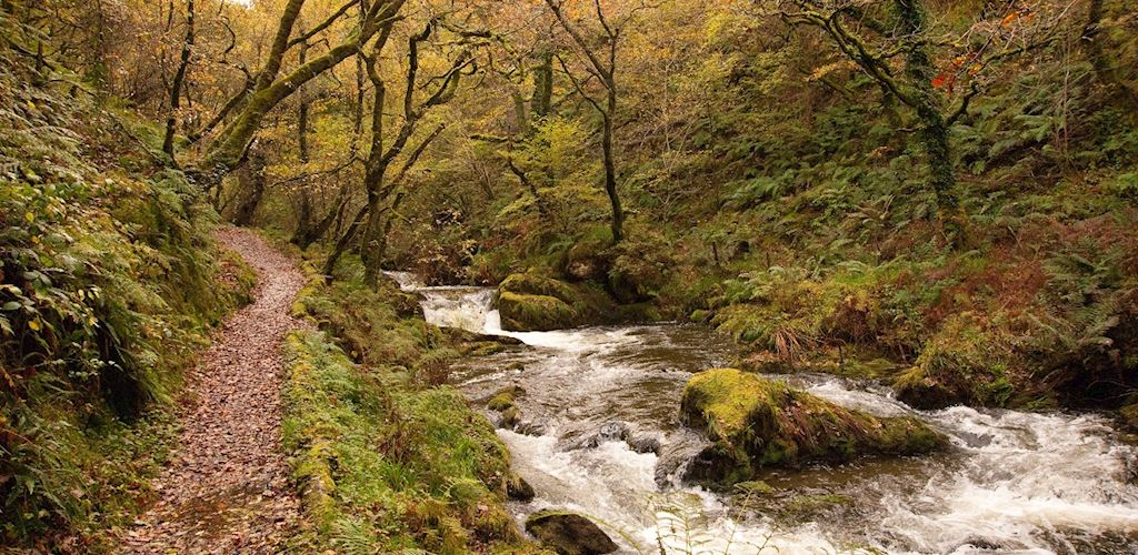 Woodland path next to stream
