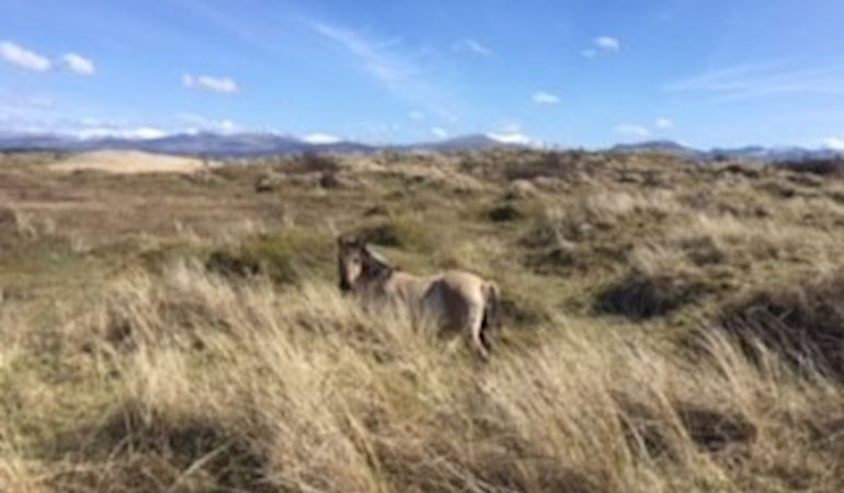 Horse at Newborough