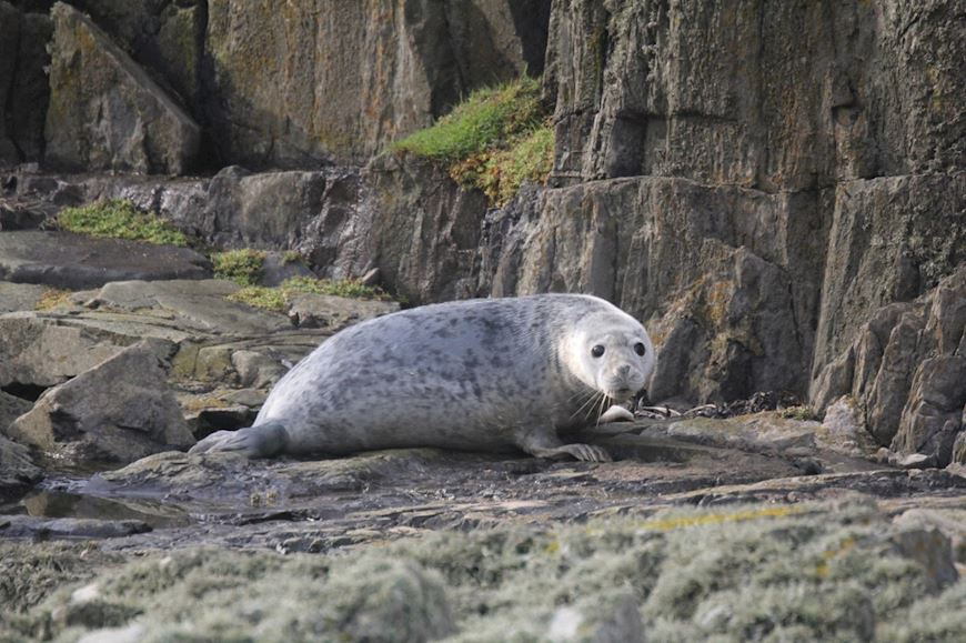 A seal on some rocks