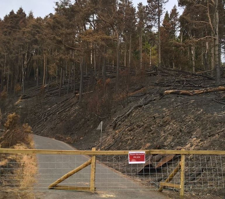 Photo of a closed forest road with burnt trees and land in the background