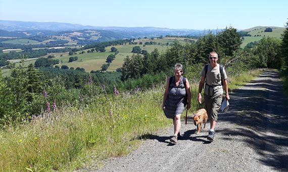 Woman, man and dog walking along a lane