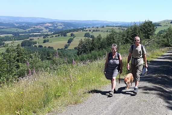 Woman, man and dog, walking along a lane