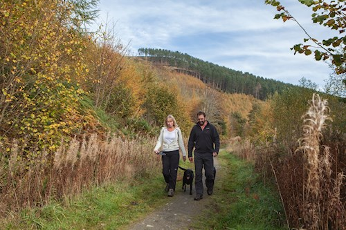 Couple walking in Coed Llangwyfan