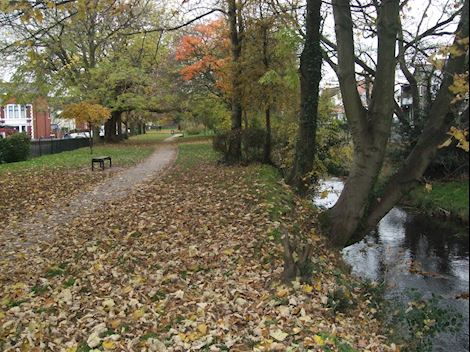 An autumnal photo of Roath Brook with the trees overhanging the riverbank and a path running through the park with fallen leaves on the floor.