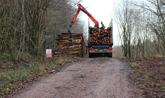Fforest Fawr timber