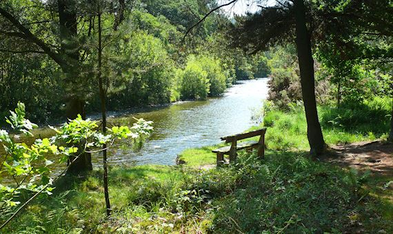 Bench in woodland by riverside
