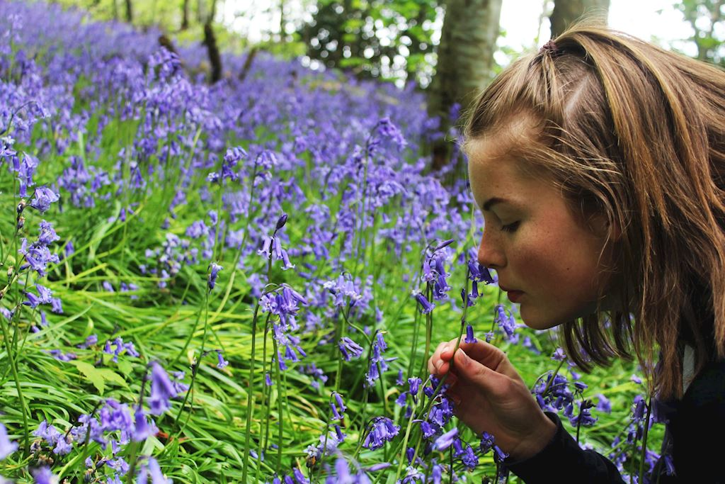 woman smelling a bluebell / woman smelling a bluebell