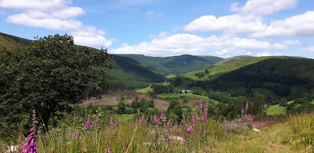 View from Pen y Bryn