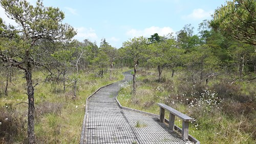 Boardwalk at Cors y Llyn