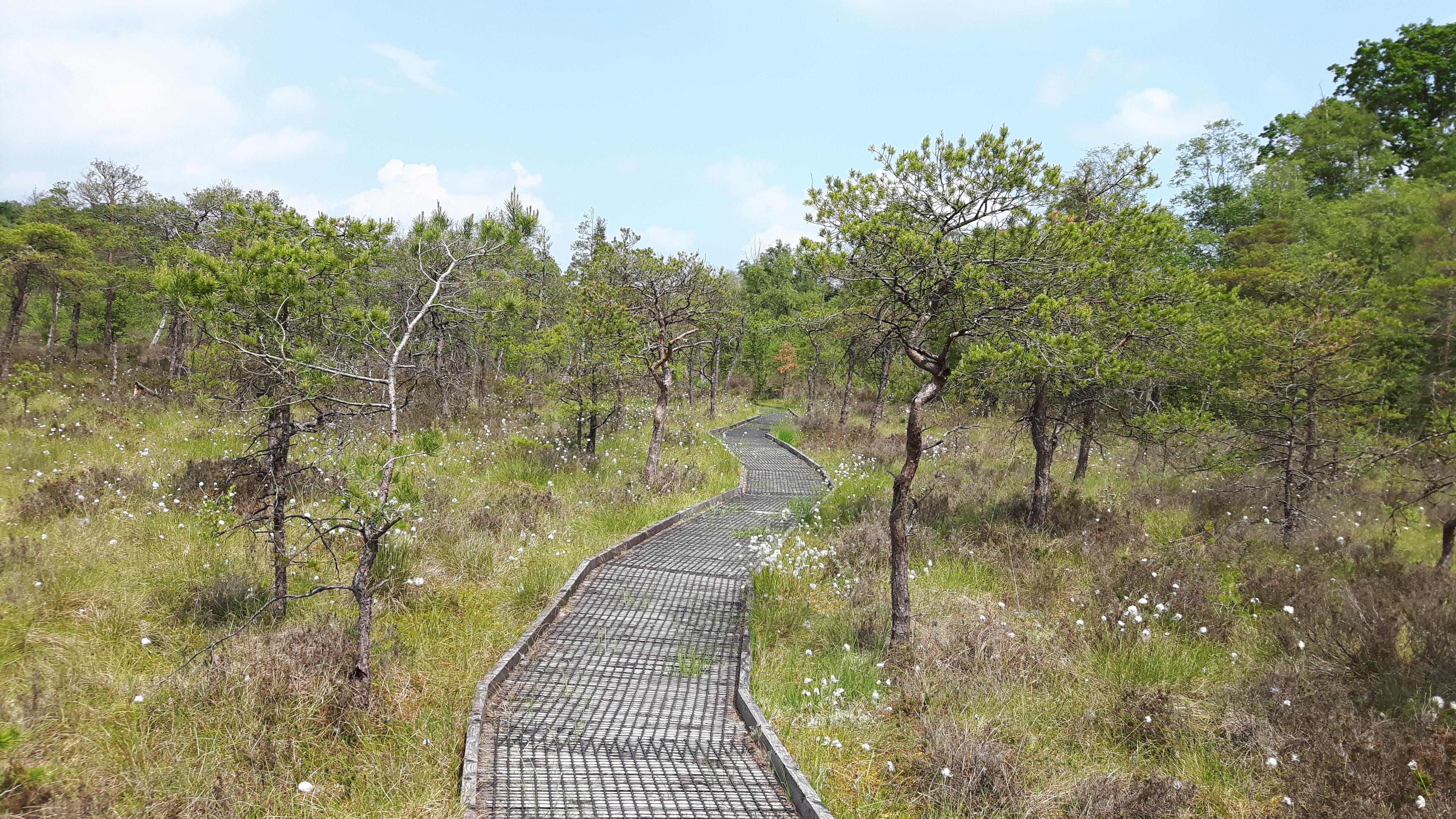 ynyslas nature reserve case study
