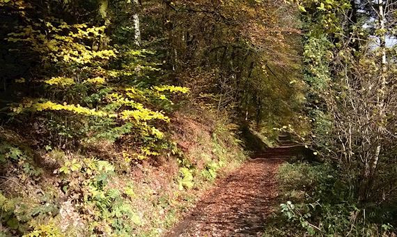Trail in woodland
