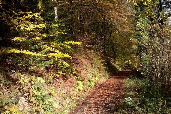 Trail in woodland