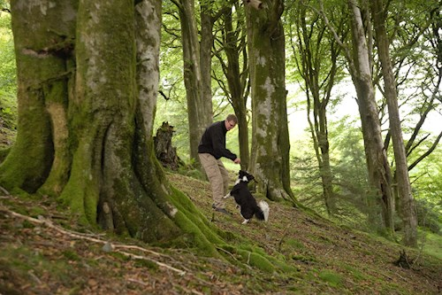 Man with dog in woodland