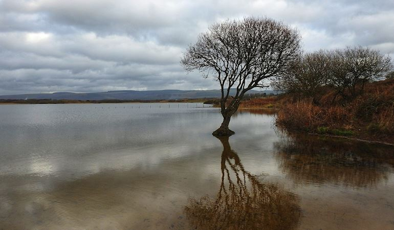 Photo of Kenfig Pool showing with a tree in the foreground and dunes and mountains in the background