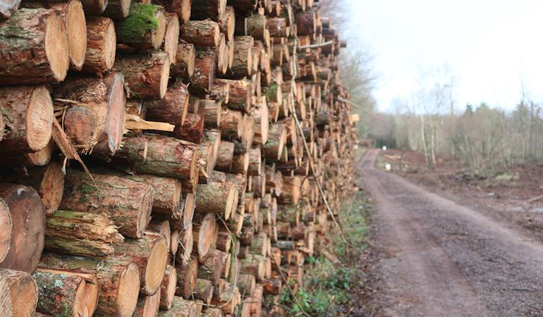 Stacked timber of side of forest road