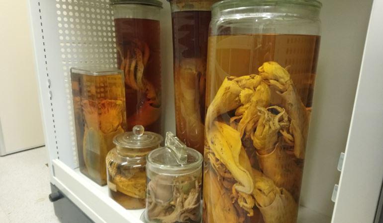 Marine invertabrate specimens