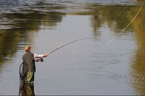 a salmon fisherman casting on river
