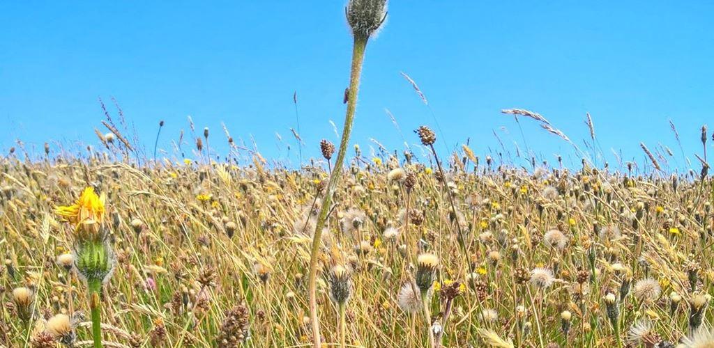 Grassland and wild flowers