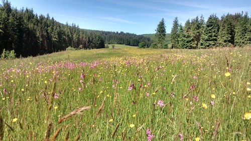 Hay meadow with forestry in the background