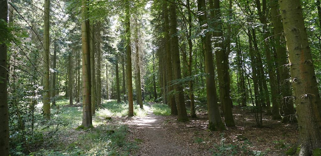 Nash Wood