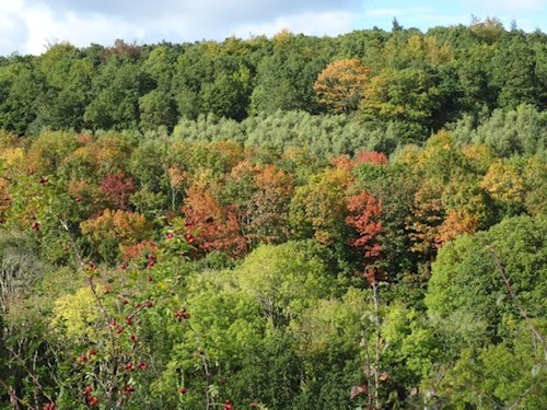 Landscape shot of deciduous woodland at Dyfnant in early autumn