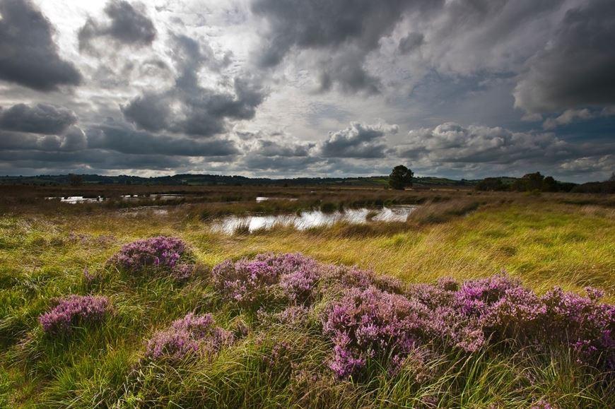 View of a peatland bog water pool